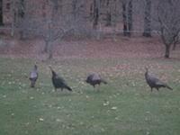 Think like a turkey!