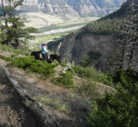 Bonnie on trail ride